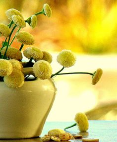Yellow Button Mums ~ Photography by Madge on Flickr.