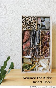 Science for Kids: Insect Hotel  A perfect place for insects to hibernate this winter!