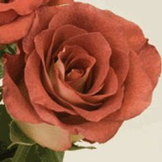 Rose - Brown tinted Leonidas, great for fall decor