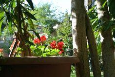 Flowers  Www.cookintuscany.com   #italy #culinary #montefollonico #cooking #cortona #underthetuscansun #italy #wine #pasta #school #cookintuscany #italyiloveyou #allinclusive #montepulciano #florence #siena #cook #cooking #class #cortona #pienza #gimignano #towers #italy #Rome #florence #underthetuscansun #italyiloveyou #underthetuscansun #montefollonico #cortona