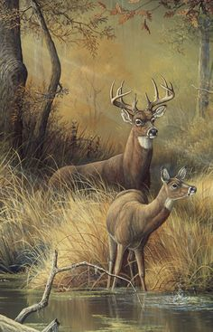 Whitetail deer buck painting by Wildlife Paintings, Wildlife Art, Animal Paintings, Animal Drawings, Deer Paintings, Deer Pictures, Animal Pictures, Animals And Pets, Cute Animals