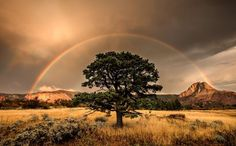 A silent rainbow appears after a brutal autumn thunderstorm rocked the higher elevations of Zion. Photograph by RJ Hooper