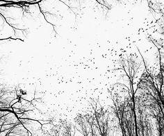 Tamas Dezco-Crows