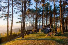 Safe house in pine forest ~ Nature Photos ~ Creative Market The Last Warrior, Pine Forest, Nature Photos, Sunrise, Country Roads, Wallpaper, House, Creative, Home