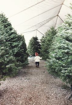 Kelli Murray   CHRISTMAS TREE HUNTING Kelli Murray
