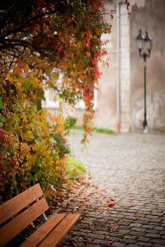 Ławka z drewna modrzewiowego. www.larslaj.pl #wood #bench #autumn