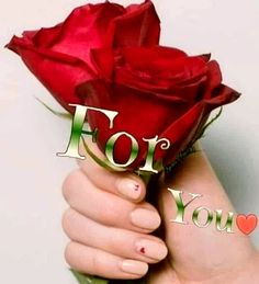 Beautiful Roses, My Love, Flowers, Frases, Royal Icing Flowers, Flower, Florals, Floral, Blossoms