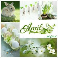 E-mail - Hubertina Simons - Outlook Seasons Months, Months In A Year, Four Seasons, Collages, Neuer Monat, April April, Pot Pourri, Shabby Chic Flowers, Photo Images