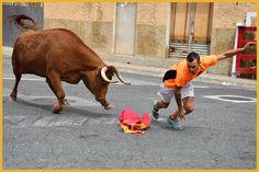 Santacara: Cogida en Santacara en Fiestas de Agosto 2019 Cow, Animals, January 20, Cows, Siblings, Fiestas, Animales, Animaux, Cattle