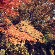 Autumn of Engakuji - kamakura