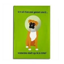 Too funny, especially with how long we have been dealing with cones at this point! Thanks for the heads up, Julie! Boxer Rescue, Kids Meals, Make Me Smile, Pup, Boxers, Thankful, Unique, Funny, Tech