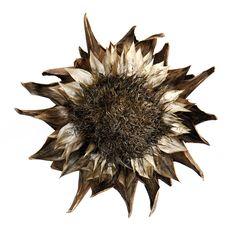 artichoke-flower- Still mary jo hoffman