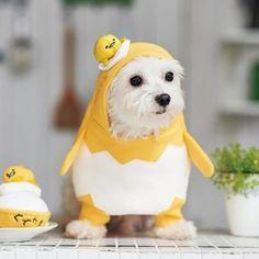 【犬服】ぐでたまなりきり