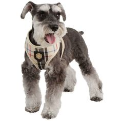 Give your four-legged friend a stylish look that will empress other school mates with this dog harness! Puppia gold emblem and plaid pattern on harness. Knit Dog Sweater, Pet Dogs, Pets, Pet Travel, Pet Life, Medium Dogs, Pet Grooming, Christmas Dog, Dog Harness
