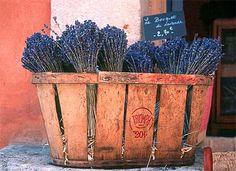 Lavender basket, Provence-Barbara van Zanten