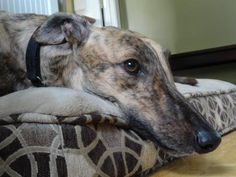 Labonte Bonnie is a tender, submissive girl who's spent her first week with her foster family just figuring things out.