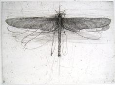 'Libellula' (Dragonfly) / Lanfranco Quadrio Italian engraver and draughtsman Gravure Illustration, Illustration Art, Dragonfly Drawing, Dragonfly Wings, Drypoint Etching, Etching Prints, Insect Art, Art Graphique, Art Plastique