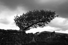 This photo let the viewer know how strong the wind was when the photographer was taking this photo. The black and white combination made the feeling more depress and lonely. Also how the tree became bended was amazingly captured. Black And White Landscape, Black And White Style, Black And White Pictures, Big And Beautiful, Beautiful World, Landscape Pictures, Love Photos, Shades Of Grey, Black And White Photography