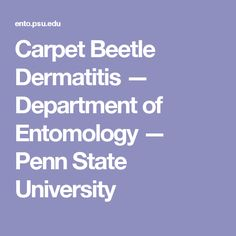Carpet Beetle Dermatitis — Department of Entomology — Penn State University Insect Species, Case Histories, Pest Management, State University, Beetle, Pennsylvania, Gardening Tips, Cleaning Hacks