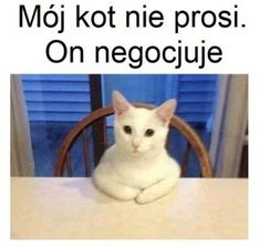 Polish Memes, Weekend Humor, Funny Mems, Nyan Cat, Some Quotes, Wtf Funny, Bts Memes, Funny Images, True Stories