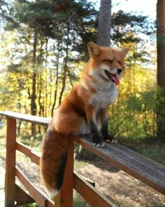 """Everything Fox - """"F"""" - Animales Cute Baby Animals, Animals And Pets, Funny Animals, Wild Animals, Amazing Animals, Animals Beautiful, Pet Fox, Red Fox Pet, Fox Baby"""
