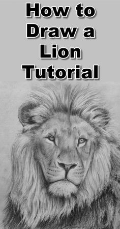 Draw a Lion in Pencil Learn how to draw a lion with this free pencil drawing tutorial.Learn how to draw a lion with this free pencil drawing tutorial. Pencil Drawing Tutorials, Pencil Art Drawings, Art Drawings Sketches, Animal Drawings, Cool Drawings, Pencil Sketching, Eye Drawings, Realistic Drawings, Art Illustrations