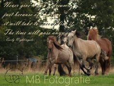 Never give up on a dream ... - Capg-Horses - Pura Raza Española - Photographer: Shunkan-Photography