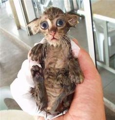 dobby want's to know why he's wet hahaha