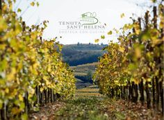 Next #Sunday #visit us at Tenuta Sant'Helena, in the heart of #Collio, to #enjoy #SanMartino #special #dish...  ...obviously paired with a ‪#‎Fantinel‬ #wine! Info: http://www.fantinel.com/news/83/  #winelover #winetime #food #foodies #restaurant #travel #taste #weekend #tourism #Hills #fvg #Friuli #italy