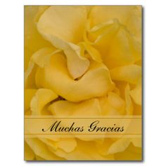 Yellow Rose Spanish Thank You Postcard