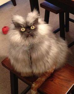pöllö kissu sanoo: HOOT HOOT! - katt eller uggla??? katt-uggla???