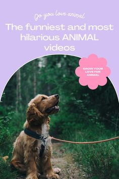 Top 10 Cutest funny animal — Small Cutest animal We Can't Get Enough Of Companion Dog Excellent. follow me for more! #dog #dogs #pet #doglover #doggy #puppy #puppies #puppys #dogoftheday #doglove #dogphotography #dogvideos #dogvideo dog, dogs, doglover Funny Animal Videos, Cute Funny Animals, Funny Dogs, Companion Dog, Try Not To Laugh, Cute Dogs And Puppies, Dog Photography, Super Funny, Dog Lovers