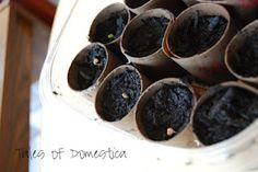 start veggie/fruit garden seeds in toilet paper rolls
