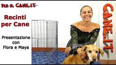 Recinti per Cuccioli e Cani adulti,  quando usarli e tipologie | PERILCA...