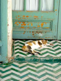 green and white chevron tiles, great door, and one cute calico kitty--whose orange spots even match the distressed door.is it true that calico cats are always female? Lost her brother, Moo. Tuile Chevron, Chevron Tile, Herringbone Tile, Green Chevron, Blue Green, Chevron Bathroom, Bathroom Green, Chevron Patterns, Design Bathroom
