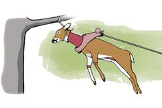 How to Skin a Deer in Less Than Five Minutes