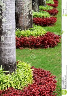 Decorating Plant Garden - Download From Over 29 Million High Quality Stock Photos, Images, Vectors. Sign up for FREE today. Image: 22436705