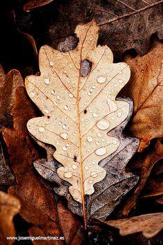 Colores de otoño | Cantabria | Spain