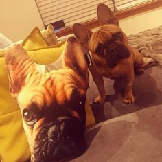 Welcome to Dogsy the home of Unique Dog Gifts & Gifts for Dog Lovers. Upload a photo today and feature them on a range of dog presents. Dog Lover Gifts, Dog Gifts, Personalized Dog Beds, Dog Presents, Photo Today, Dog Owners, French Bulldog, Cushions, Sofa