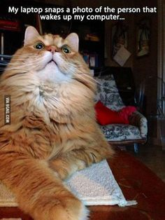 My favorite cat burglar