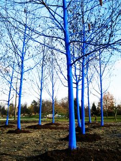 Poppytalk: The Blue Trees