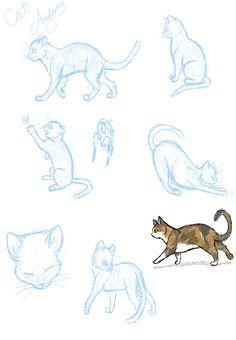 Cat Anatomy Practice...? by ~SasoriDanna94 on deviantART