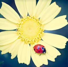 Ladybug 🐞 On Yellow 🌼