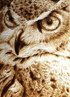 579 best images about Pyrography Wood Burning Crafts, Wood Burning Patterns, Pyrography Patterns, Laser Art, Owl Eyes, Wood Carving Art, Gourd Art, Owl Art, Wildlife Art