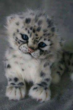 Filhote de leopardo da neve
