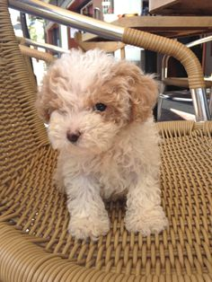 such a cute puppy!