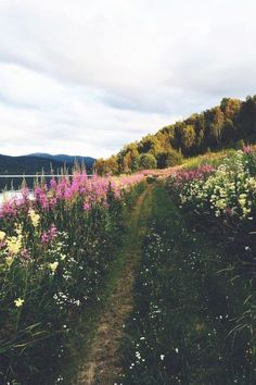 Norway, photo by Camilla Storjord