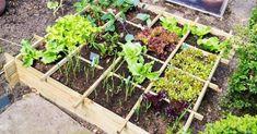 Claves para crear un precioso huerto ¡¡en tan solo 1 metro cuadrado¡!
