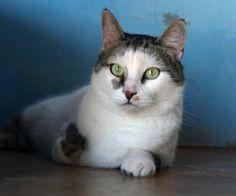 URKO - Gato adoptado - AsoKa el grande