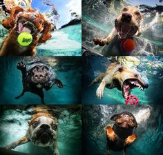 Pejsci pod vodou